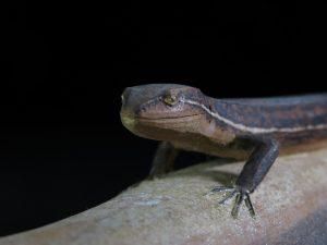 【木製彫刻】宮本理三郎 蜥蜴を買取り致しました。