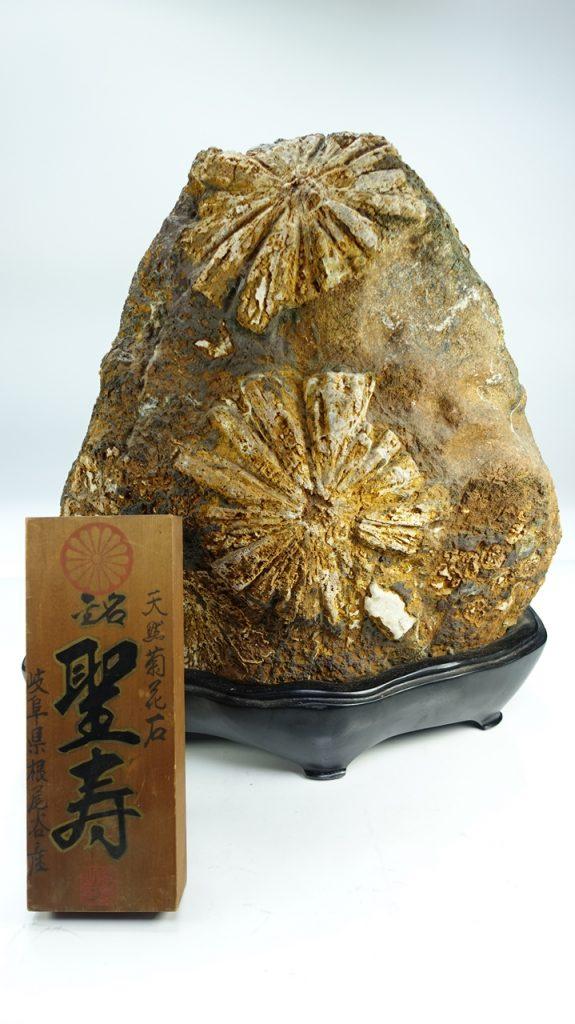 【水石・鑑賞石】天然菊花石『銘 聖寿』を買取り致しました。