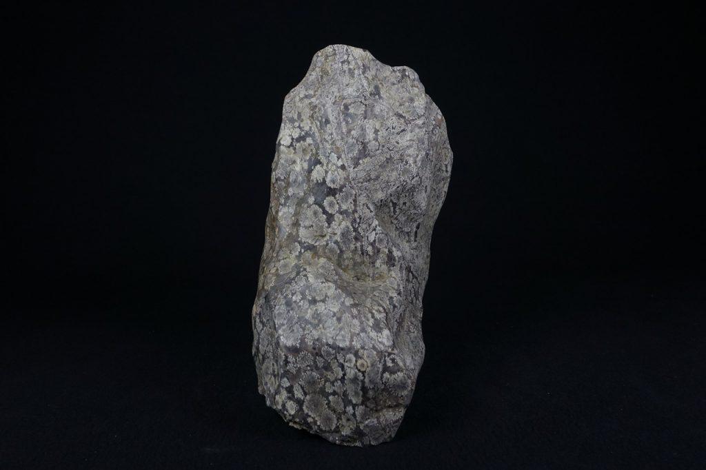 【水石、観賞石】 菊花石 全長:24.5㎝ を買取り致しました。