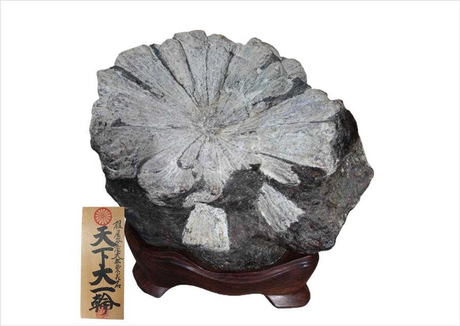 根尾谷産 菊花石3点「天下大一輪・泉花浄心・菊寿峰」を買取致しました。
