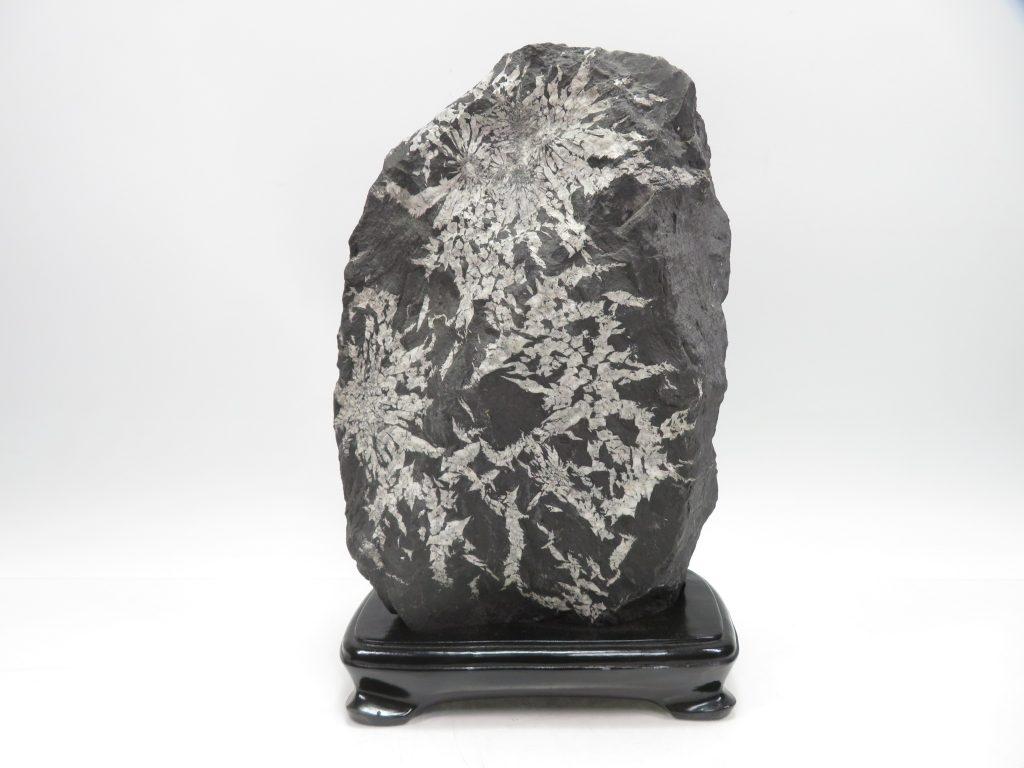 【水石・鑑賞石】菊花石(全長36㎝)を買取り致しました。